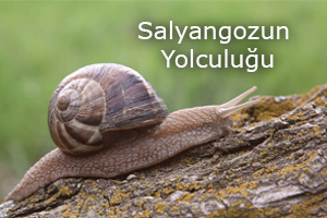 salyol