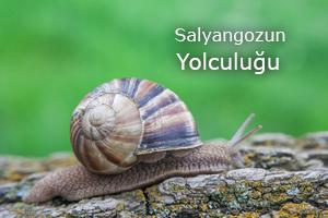 salyol1